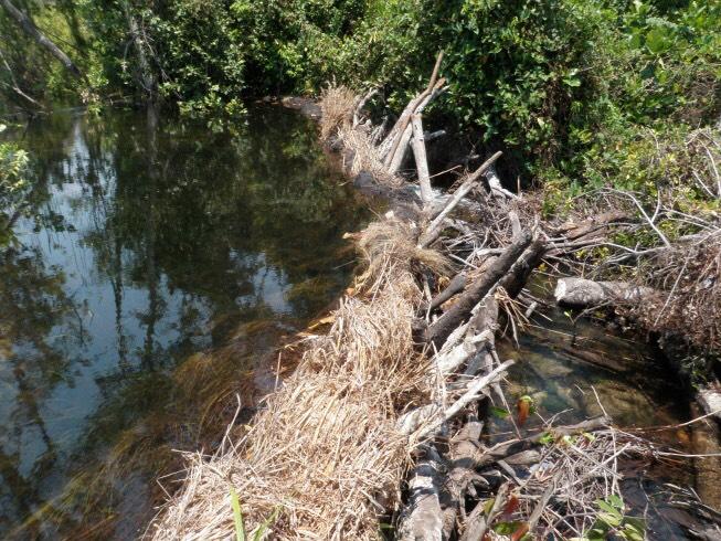 ザンビアの簡易堰 現地で調達可能なもので作られている